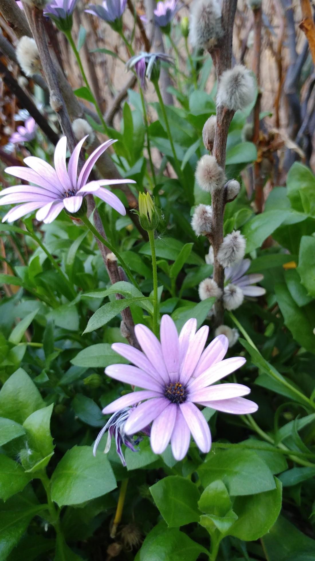 flower blog 180718